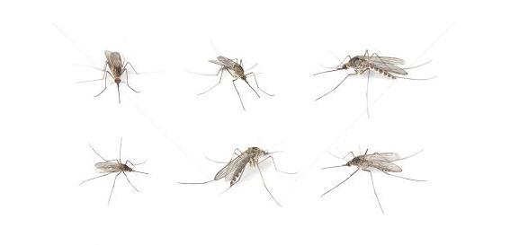 eliminar-mosquitos-moscas-valladolid