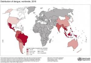 carte dengue 2016 OMS