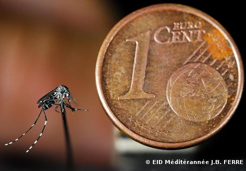 moustique tigre la progression s 39 acc l re. Black Bedroom Furniture Sets. Home Design Ideas