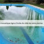 Aedes albopictus s'invite dans vos piscines