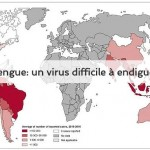 dengue un virus difficile à endiguer Vigilance Moustiques