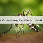moustique tigre, pouvez vous l'identifier