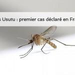 Virus Usutu premier cas déclaré en France