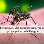 lutte biologique contre la propagation de la dengue,bactérie wolbachia